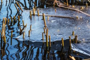 March thaw, pond,ice.